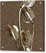 Seed Pods Macro Acrylic Print