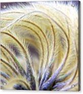 Seedheads Acrylic Print