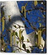 Seeds Acrylic Print
