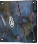 Seeds In A Pod Dark Acrylic Print