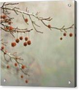 Seeds Of Fall Acrylic Print