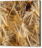 Seeds Of Winter Acrylic Print