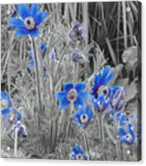 Seeing Blue Acrylic Print