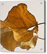 Seeing Double Autumn Leaf  Acrylic Print