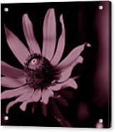 Seeing Life Through Rose-colored Glasses Acrylic Print