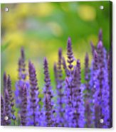 Seeing Purple Acrylic Print
