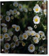 Seeking Sun Acrylic Print