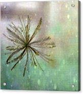 Seen In The Wind Acrylic Print