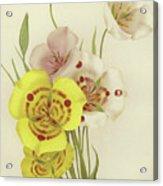 Sego Lily   Calochortus Acrylic Print