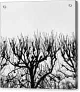 Seine River Trees Acrylic Print