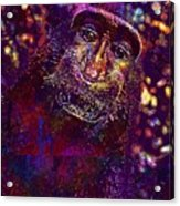 Selfie Monkey Self Portrait  Acrylic Print