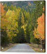Selkirk Color Acrylic Print