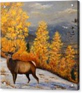 Selkirk Elk Acrylic Print