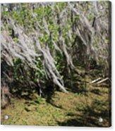 Seminole Wind Acrylic Print