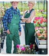 Senior Gardener And Middle-aged Gardener At Work. Acrylic Print