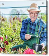 Senior Gardener Selecting A Tree. Acrylic Print