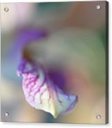Sensual Touch Of Exotic. Orchid I Acrylic Print