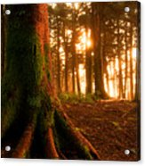 Sentiel Of The Forest Acrylic Print