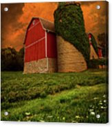 Sentient Acrylic Print by Phil Koch
