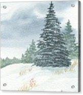 Sentinel Spruce Acrylic Print