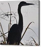 Sentry Of The Lake Acrylic Print
