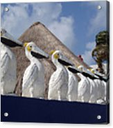 Sentry Pelicans Acrylic Print