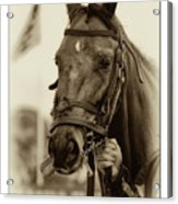 Sephia Racehorse Acrylic Print