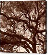 Sepia Branch Burst Acrylic Print