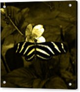 Sepia Butterfly And Flower Acrylic Print