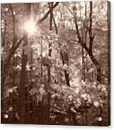 Sepia Forest Acrylic Print