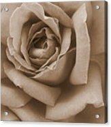 Sepia Rose Abstract Acrylic Print