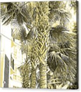 Sepia Toned Pen And Ink Palm Trees Acrylic Print