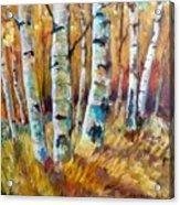 September Aspen Acrylic Print