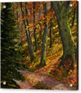 September Road Acrylic Print