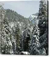 Sequoia National Park 7 Acrylic Print