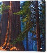 Sequoias On Blue Acrylic Print