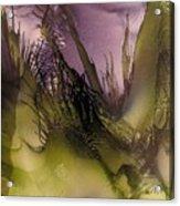 Sera Acrylic Print