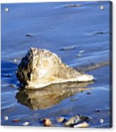 Serene Conch Shell At Isle Of Palms Acrylic Print