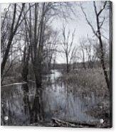 Serene Swampy River Acrylic Print