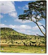Serengeti Classic Acrylic Print