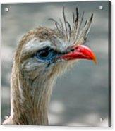 Seriema Bird Alert Acrylic Print