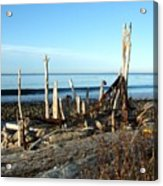 Seth's Seaside Driftwood Sculpture  Acrylic Print