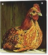 Setting Hen Acrylic Print