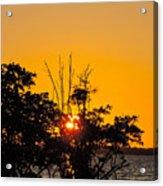Setting Mangrove Sun Acrylic Print