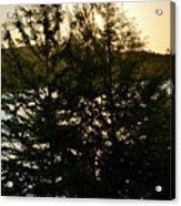 Setting Sun Through A Cypress Tree Acrylic Print