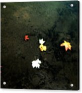 Seven Leaves At The Pond's Edge Acrylic Print