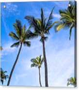 Seven Palms Of Paradise Acrylic Print