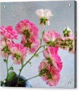Seven Sisters Roses Acrylic Print