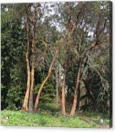 Seward Park Trees Acrylic Print