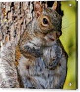 Sexy Squirrel Acrylic Print